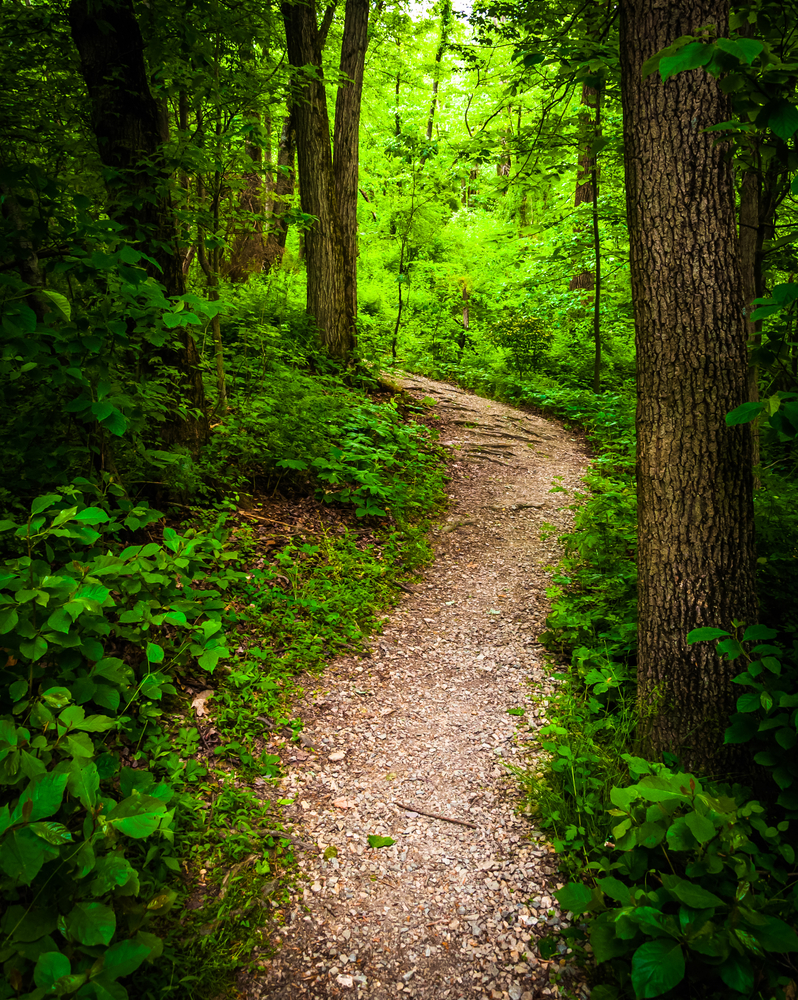 incognito-trail-through-lush-green-forest-in-codorus-state-park-pennsylvania