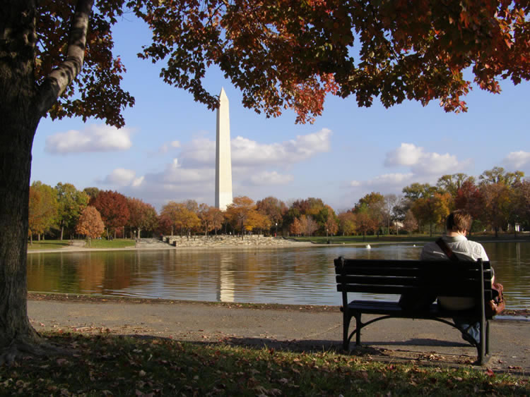 tree-and-a-man-sitting-while-looking-into-washington-monument-incognito-software